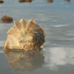 Muschelsuche Sanibel